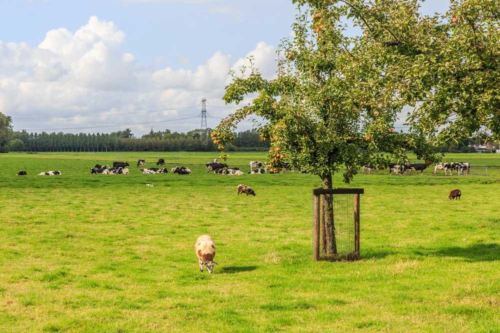 farmland-sm.jpg