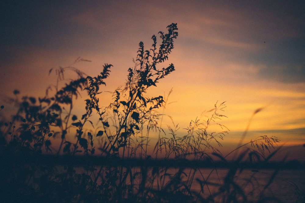 stillness | Erin Westermeyer