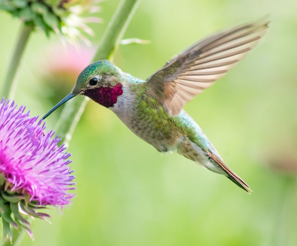 Humming Bird Retouched.jpg