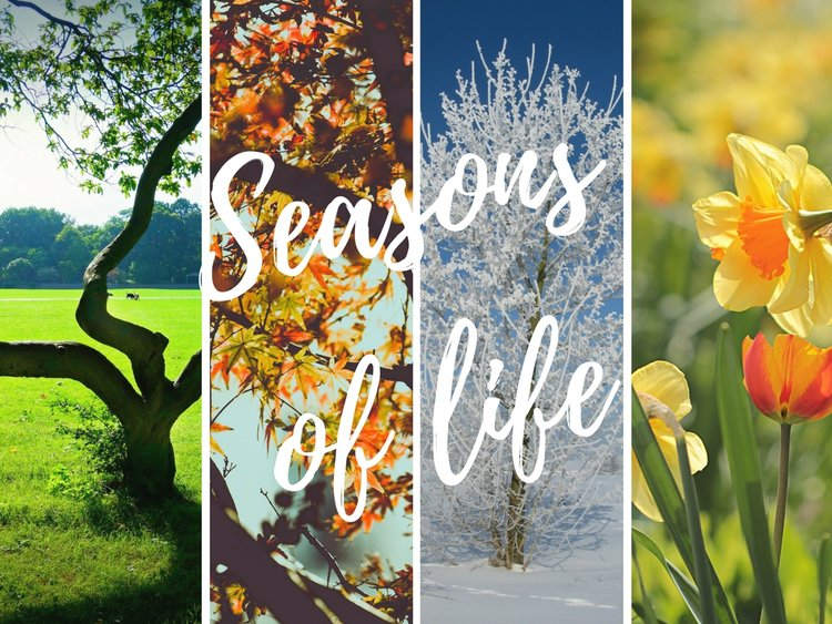 seasons of life st marks west wollongong