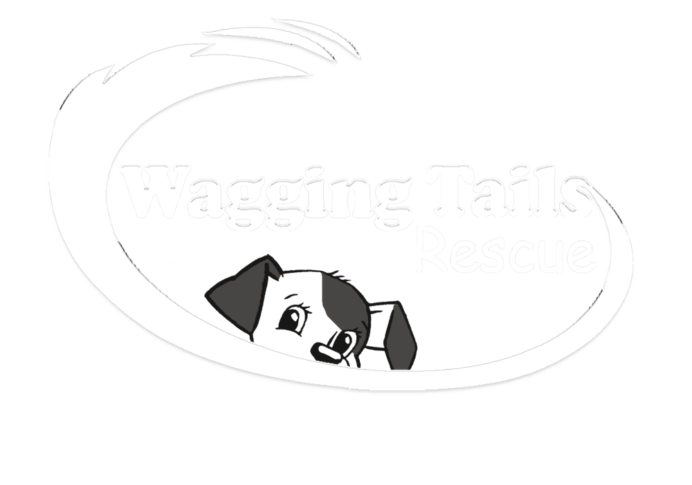 Wagging Tails Rescue Las Vegas