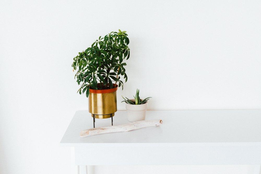Mosman Collective/Indoor plants