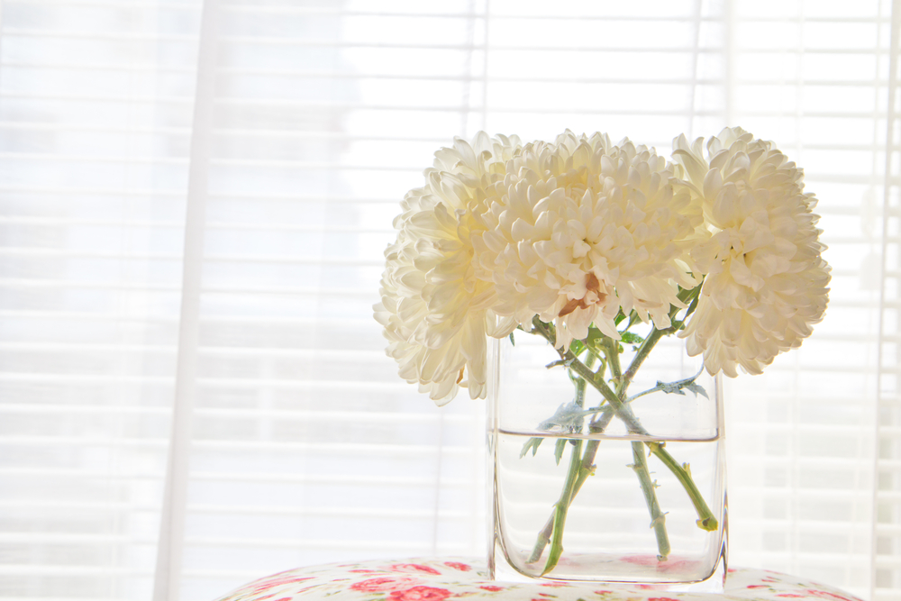 Don't be put off by the chrysanthemum   revival!