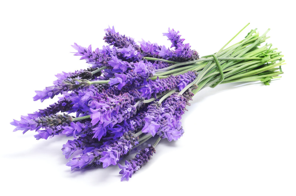 9. Lavender - Lavender is good for heaps of things. You can pop some in your undie drawer to make your dacks smell nice, you can use it to aid sleep, or to remind you of your Grandma ... or as a mosquito repeller! They hate the stuff (and I'm not mad on it either!)