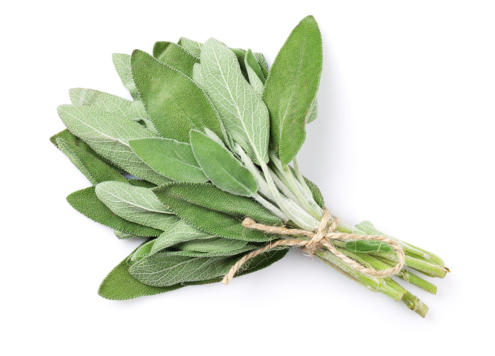 10. Sage - If you're gathering around the barbie, or a fire - try burning some sage (or rosemary). The incense these plants give off smells great to us, but its totally unpleasant to most species of insects!