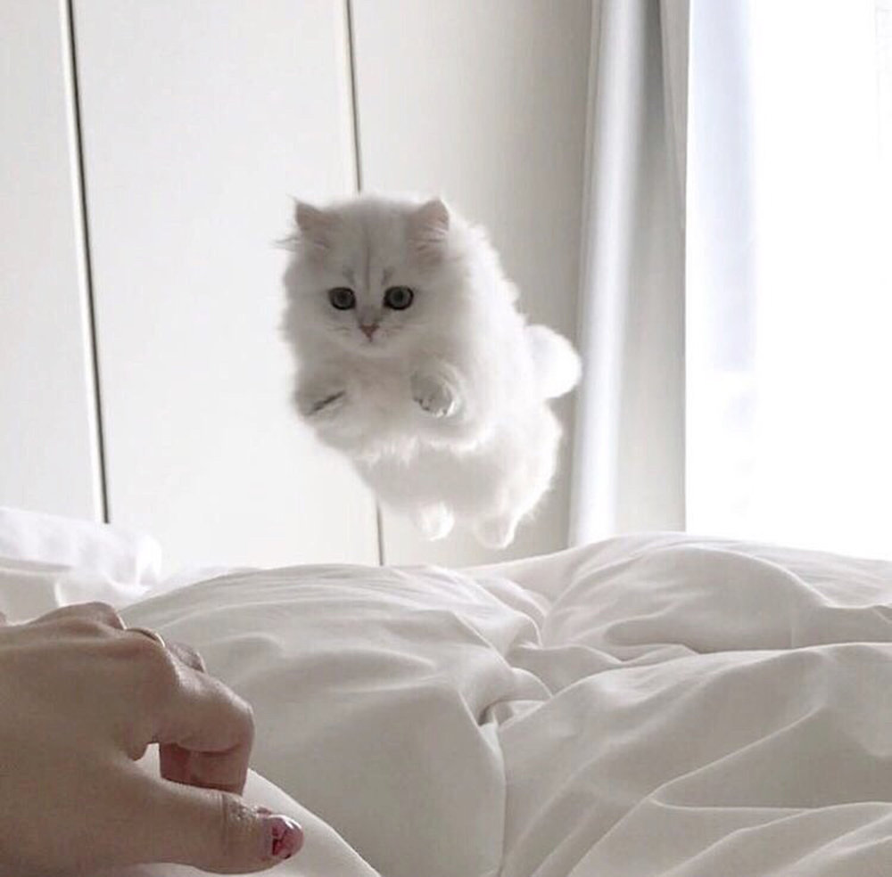 Happy Sunday! I'm sure this fluffy kitten isn't the only one jumping into the comforts of her (human's) bed - cause, let's be honest, there's really no place like home. Enjoy the rest of your Sunday lovelies! 😽