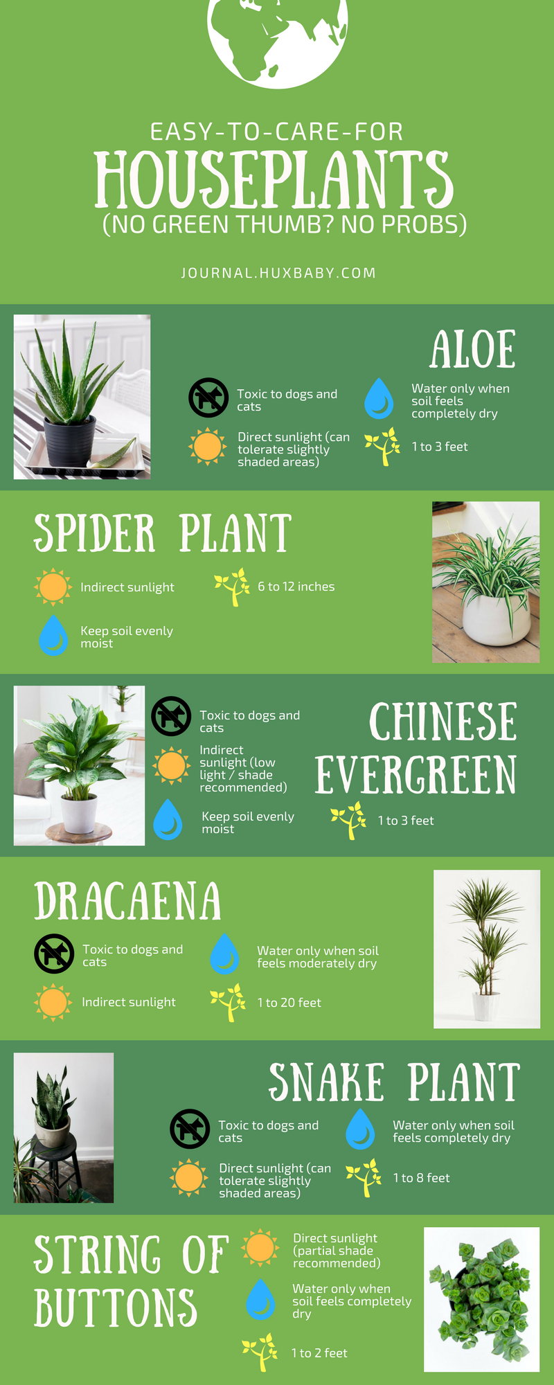 Houseplants Infographic(1).png