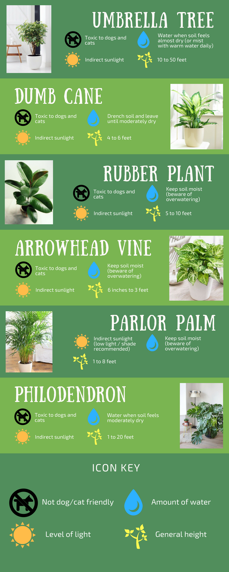 Houseplants Infographic(2).png