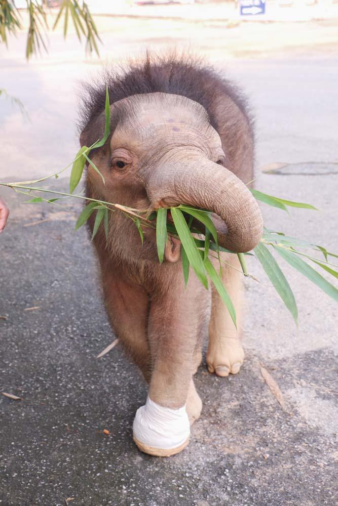 Fahjem_elephant_nongnooch pattaya_thailand_6.jpg