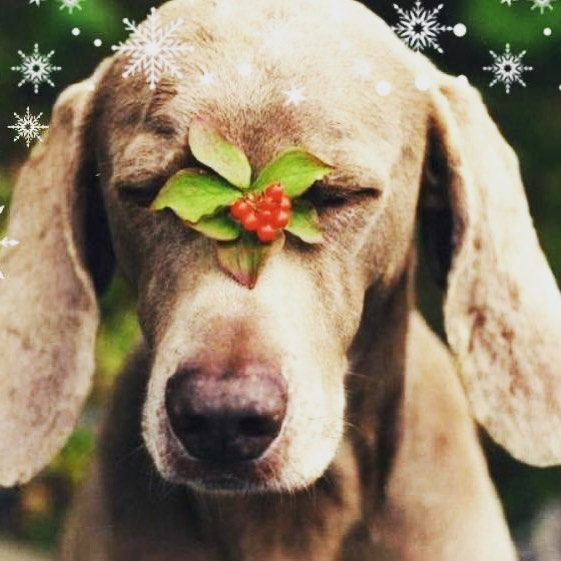 Happy holidays from the DWW Canine Nutrition family🎄🎁❄️Making even small changes for our beloved canine companions can make a big difference! #wehavechoices #youhavechoices #wholefoodnutrition #bioavailablenutrition #foodismedicine #happyholidays