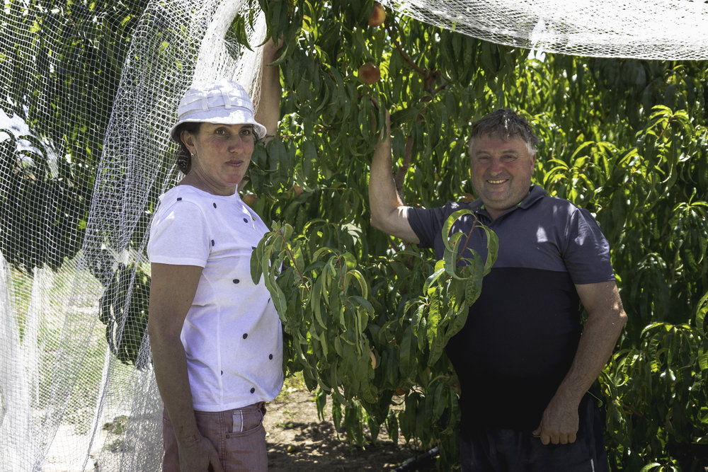 The Scott Family and their Farm - Cheers to the Scott family for their ongoing generosity of homegrown peaches.  Their peach farm in Glenorie has been a family run farm over many generations.