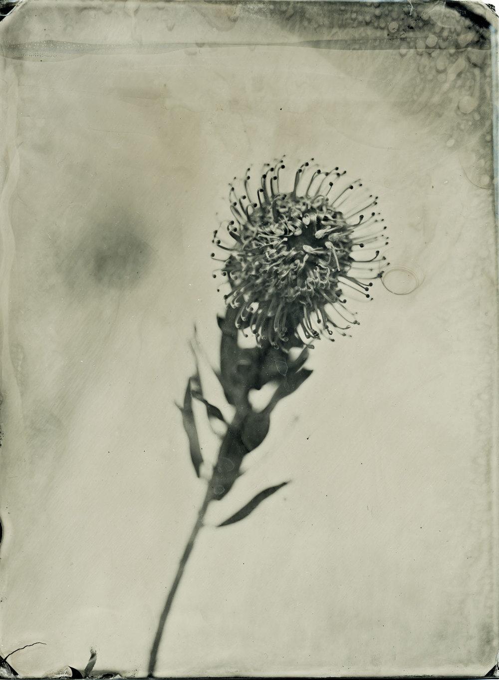 flowerclearglass.jpg