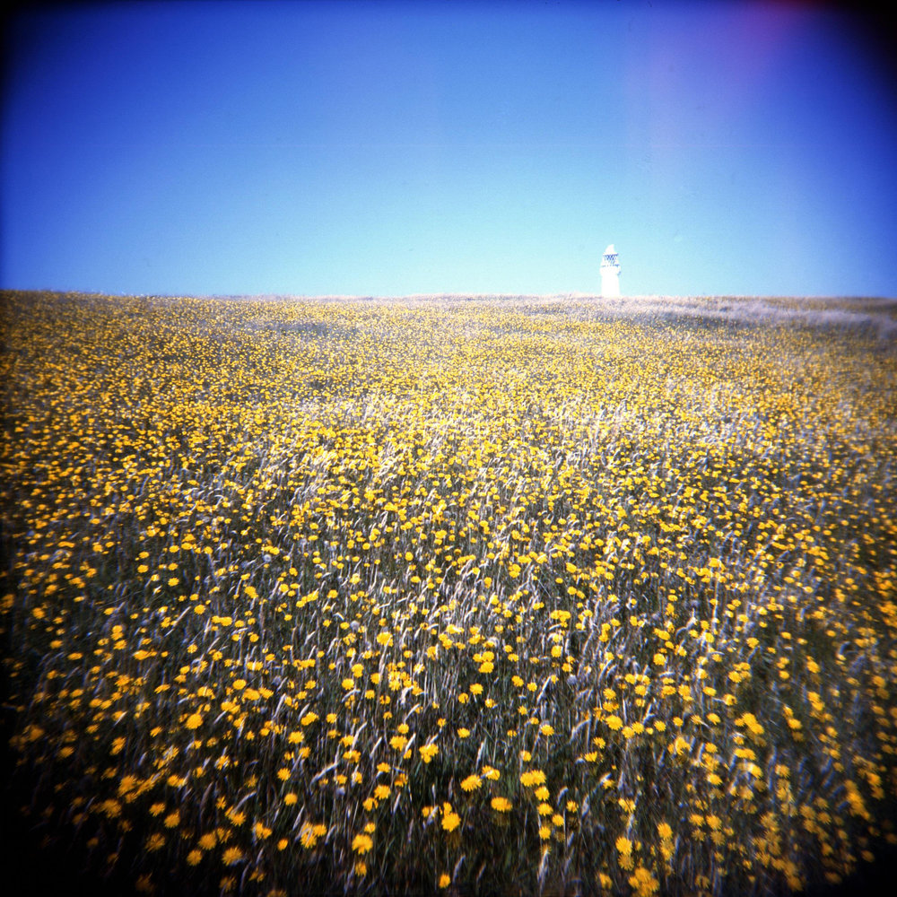 Lighthouse & flower sea.jpg