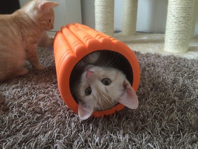 mobility cat.jpg