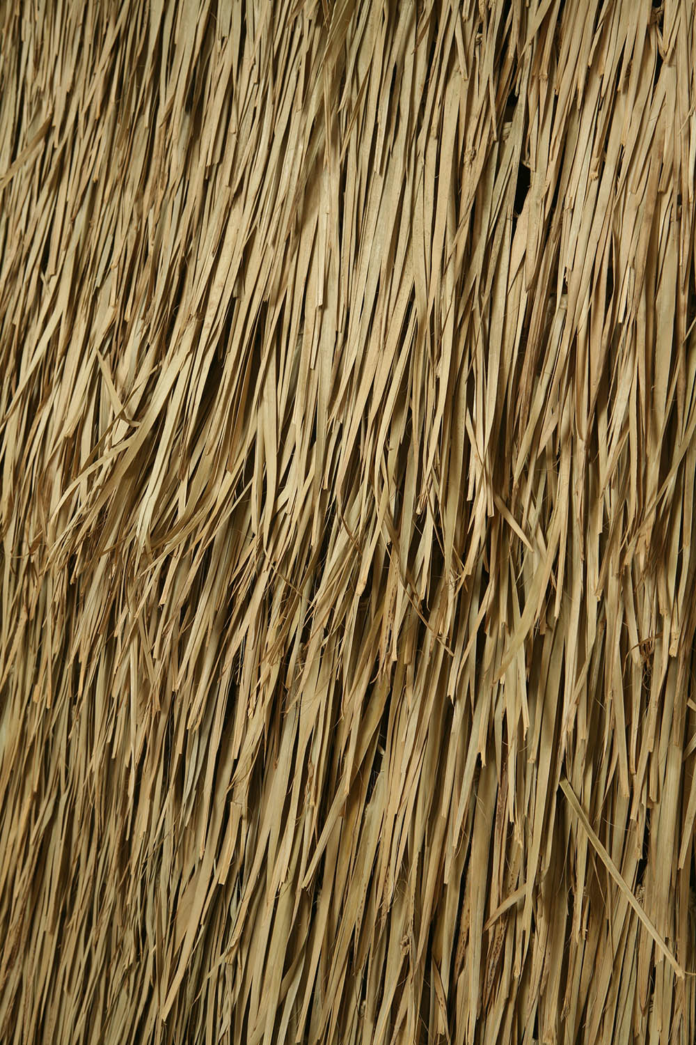 west_seattle__palmthatchcloseup_1500.jpg