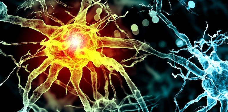 Todo comienza en el sistema nervioso - Fechas: Comienzo Octubre 2019