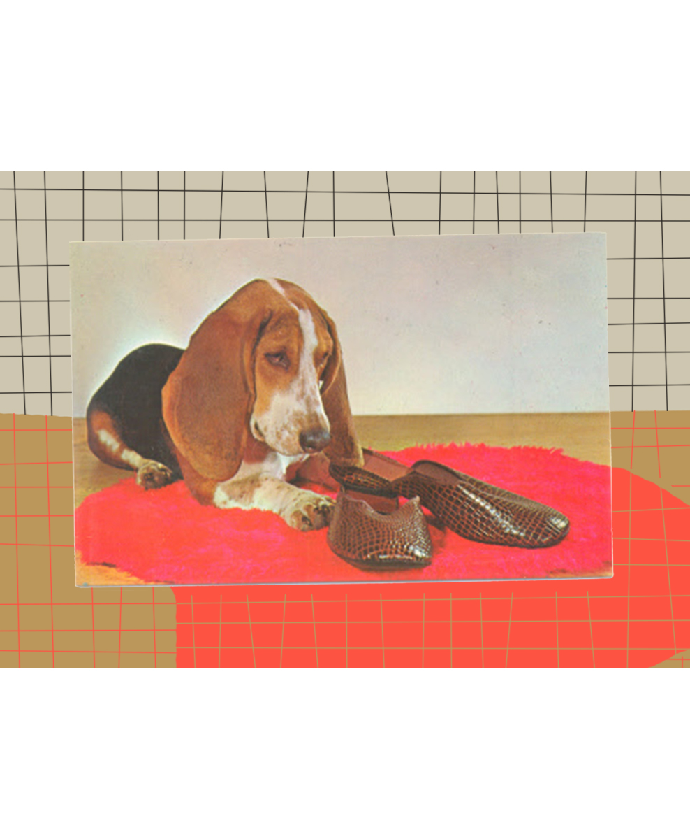 bassethound-withborder.jpg