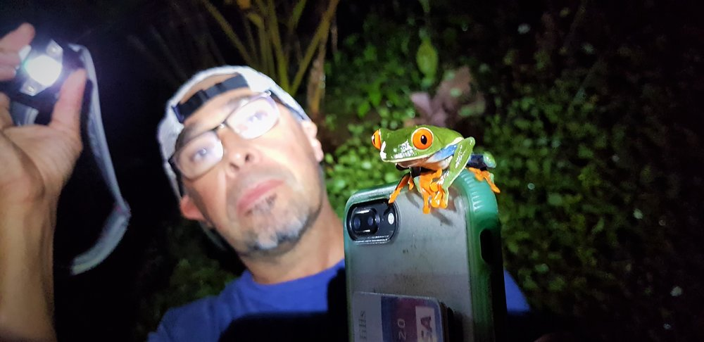 Red eye leaf frog, ....and Luis