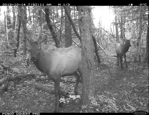 A trail camera on NCC's Brooks property in Waterton, AB, gives a sneak peek into the activities of local wildlife. NCC