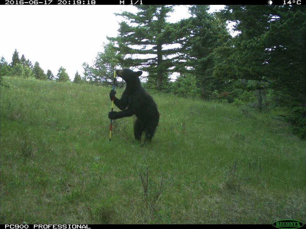 Photo Craig Harding, Nature Conservancy of Canada