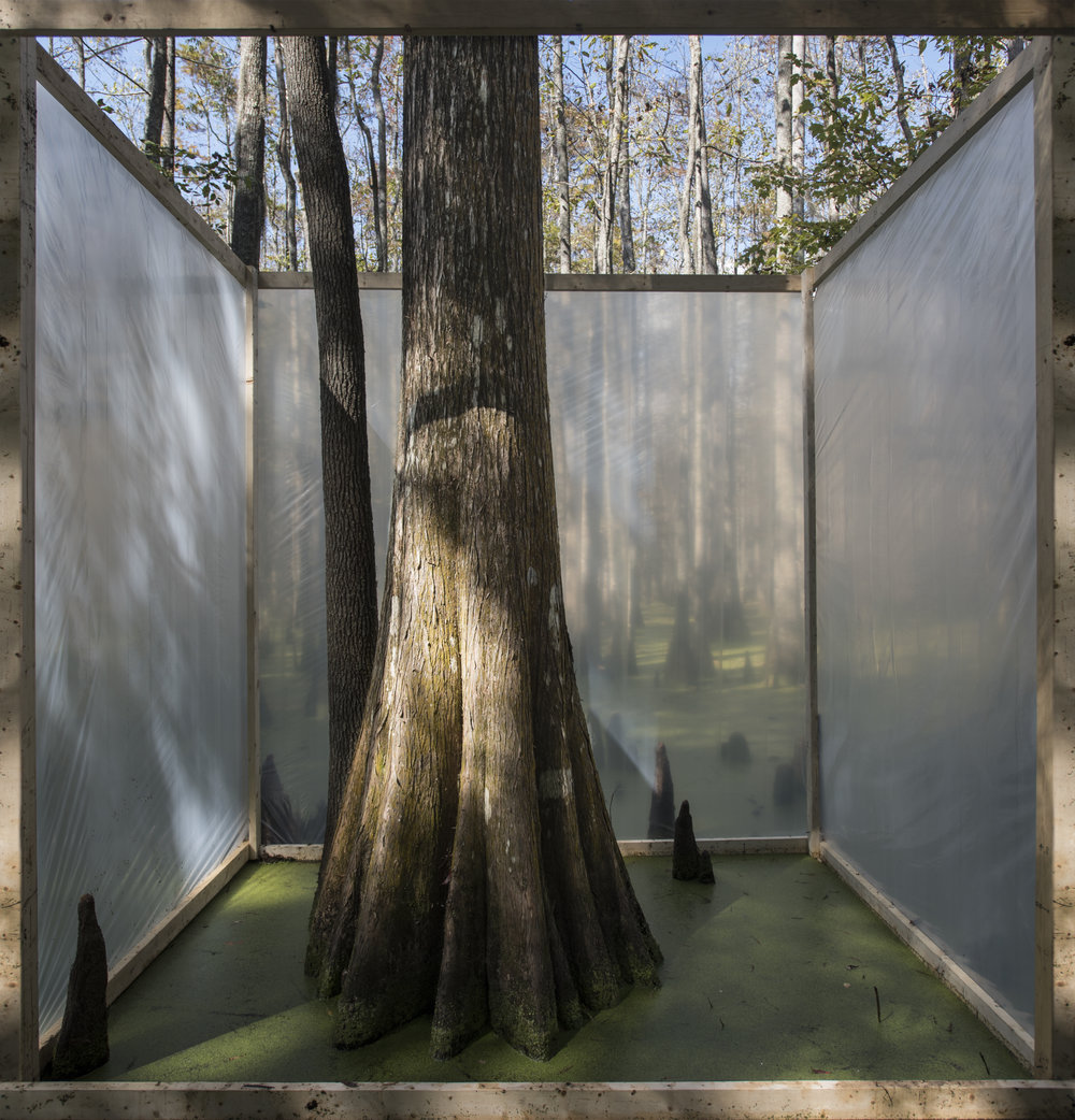 cypress-01.jpg