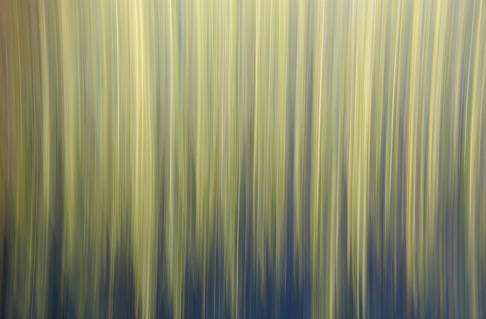 No.37 Marsh Reeds Summer #3318