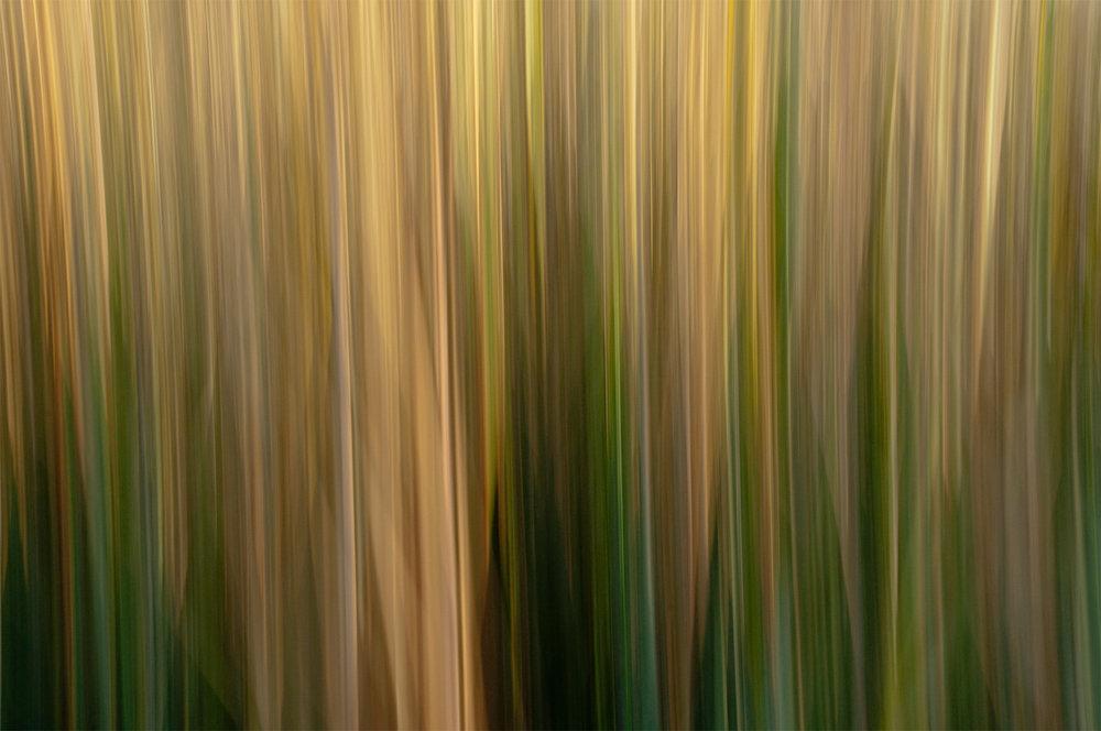 No.55 Marsh Reeds Winter #72819