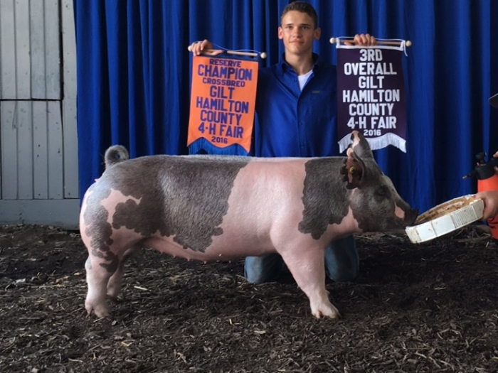 3rd Overall Gilt | Reserve Cross | Hamilton County 4-H Fair 2016