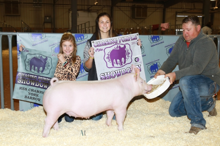 Reserve Champion York Barrow | 2017 OKJSA Chasing Purple Showdown