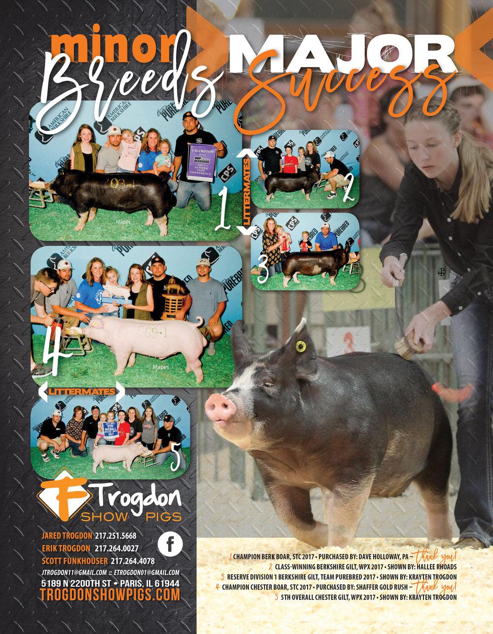 Trogdon-Show-Pigs_Su17_minorbreeds-majorsuccess-ad.jpg