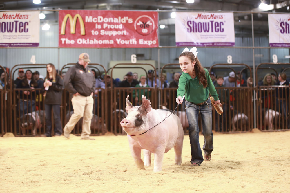 Trogdon-Show-Pigs_Mar10.jpg