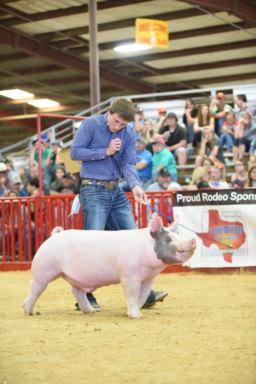Trogdon-Show-Pigs_Feb23.jpg