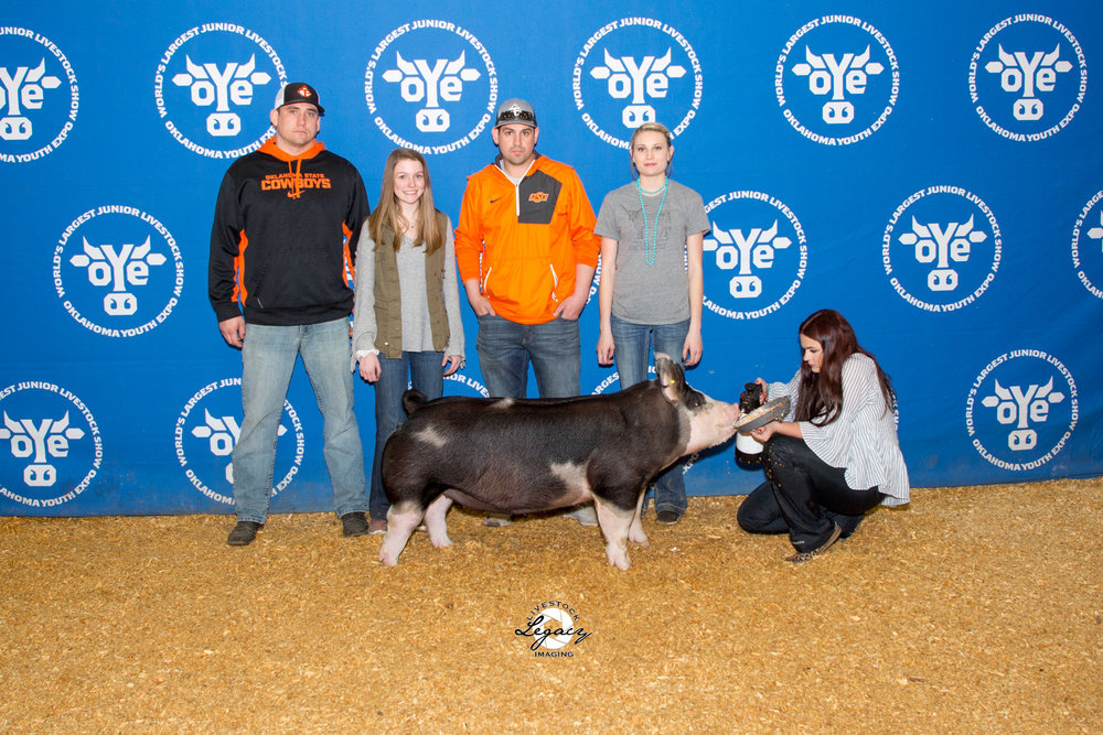 6th Overall Berk Gilt | OYE 2018 Champion Purebred | SW District