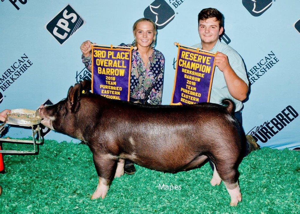 Reserve Berkshire Barrow, 3rd Overall | Team Purebred Eastern Regional 2018