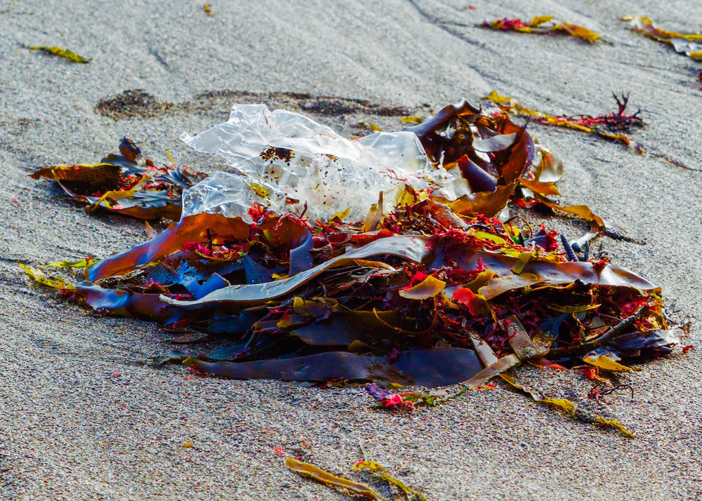 Rainbow seaweed and plastic