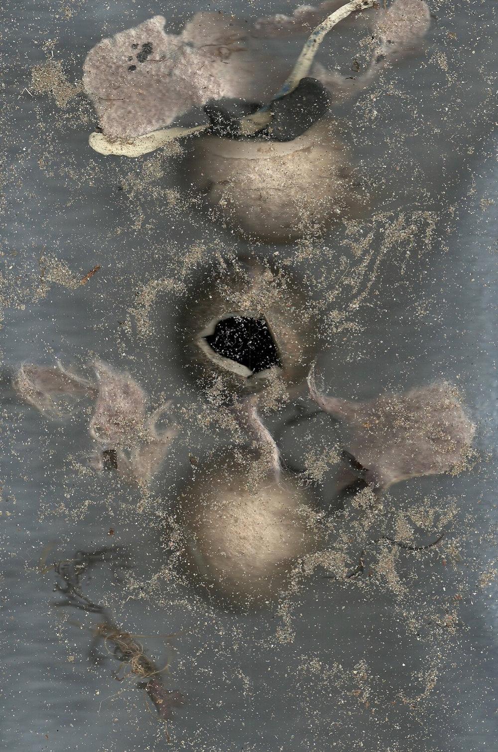 Disintegrated Tennis Balls