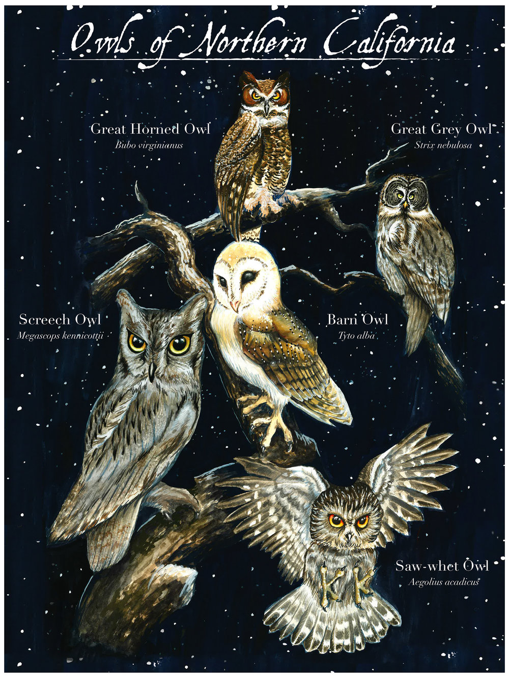 Owls of Northern California