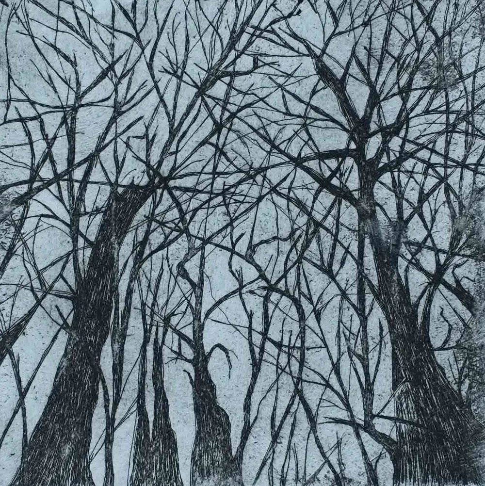 """Old Growth (2011)  8""""x8"""", copper etching on paper"""