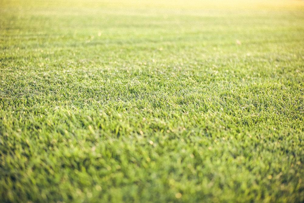 Der erste Schnitt nach dem Verlegen - In der Regel liegt die Schnitthöhe bei unserem Rollrasen bei ca. 3,5 - 4,5 cm. Der erste Schnitt erfolgt bei einer Aufwuchshöhe von ca. 8 cm.Es sollte niemals mehr als 1/3 der Blatthöhe abgemäht werden. Sonst besteht die Gefahr der Ausdünnung. Je nach Witterung wird der Rasen mindestens ein Mal in der Woche gemäht.Die optimale Schnitthöhe in der Anwachsphase liegt bei 4-5 cm.