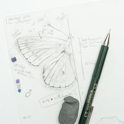 Workflow_sketch.jpg