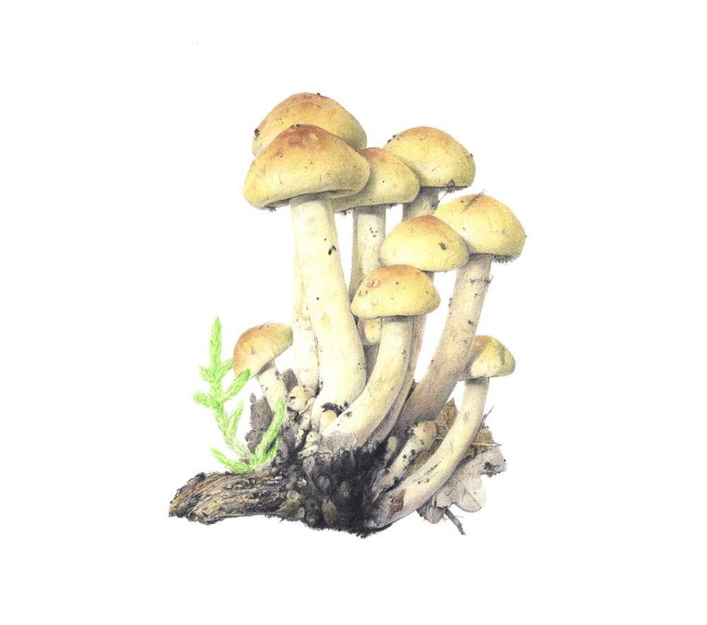 GALLERY_Colour_fungi_1.jpg