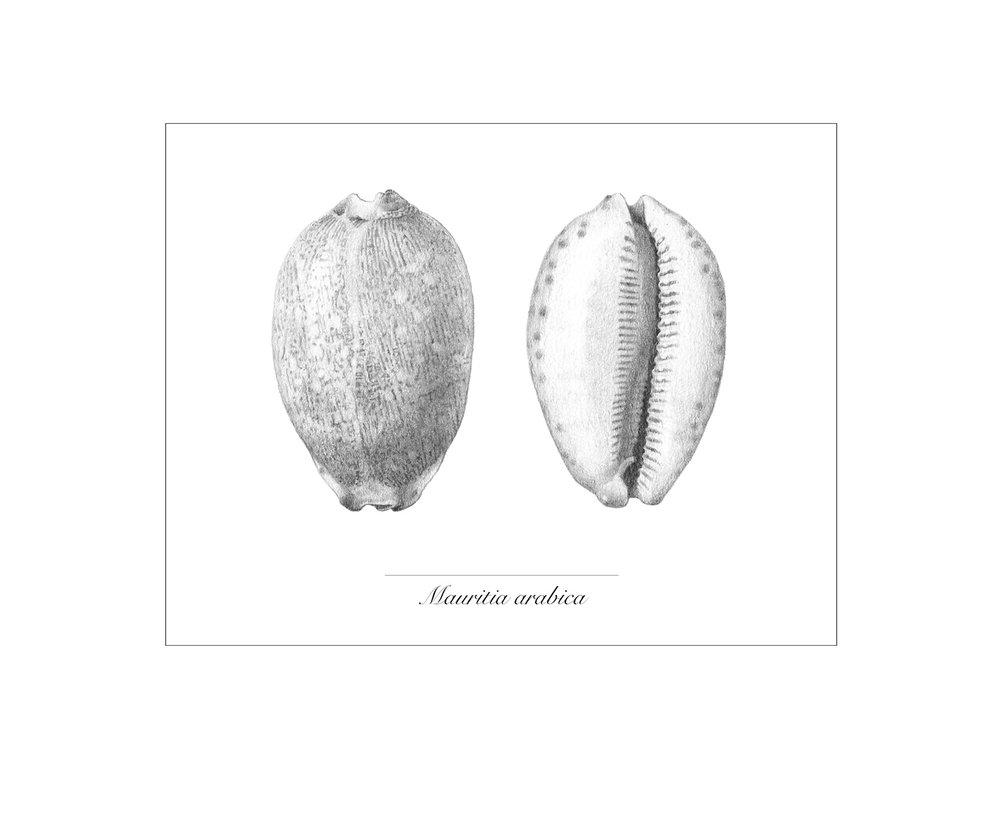 GALLERY_Tonal_mauritia-v2.jpg