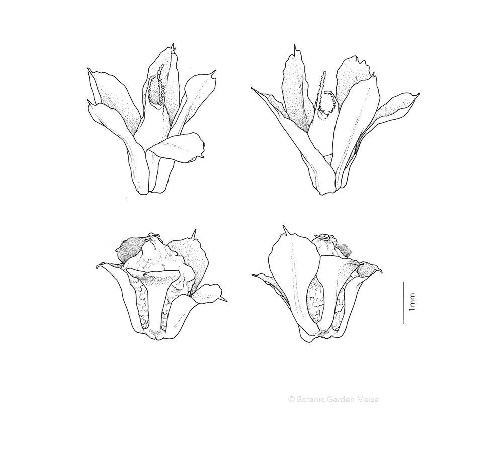 GALLERY_B&W_amaranthus.jpg