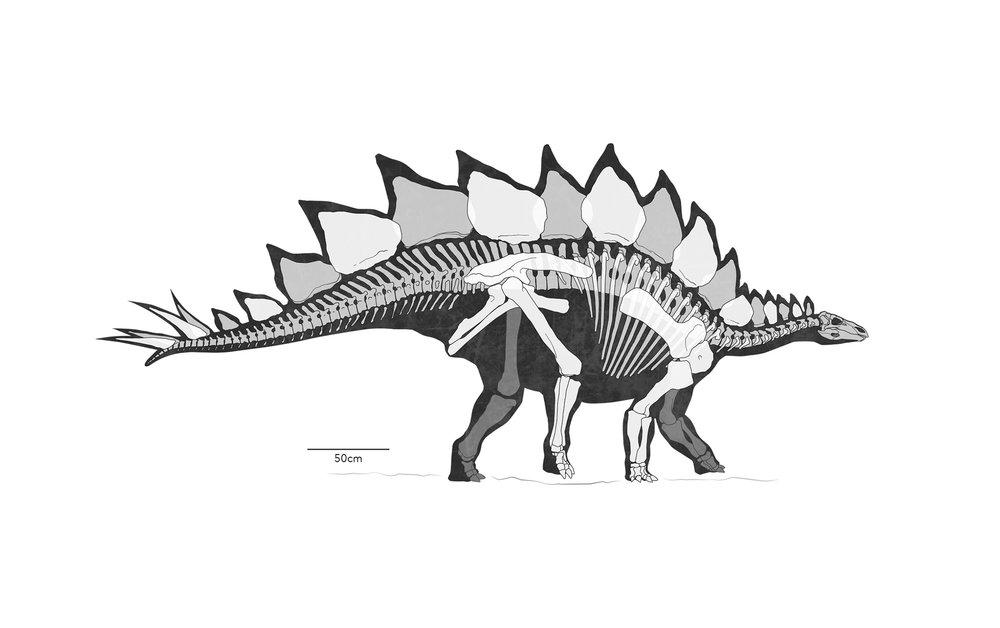 GALLERY_B&W_Stegosaurus.jpg