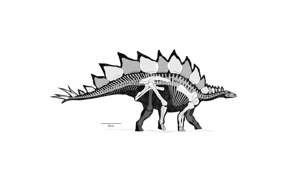 HOME_gallery-Stegosaurus.jpg