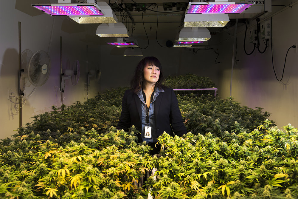 Wendy Hull with Fairwinds Cannabis poses for a press photo in one of the company's flower rooms on Tuesday afternoon, feb. 12, 2019.