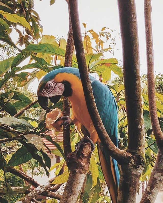 This parrot only repeats people's reaction to the Ecuadorian jungle. Needless to say we can't print those words here.🇪🇨(📷 Samantha B.)
