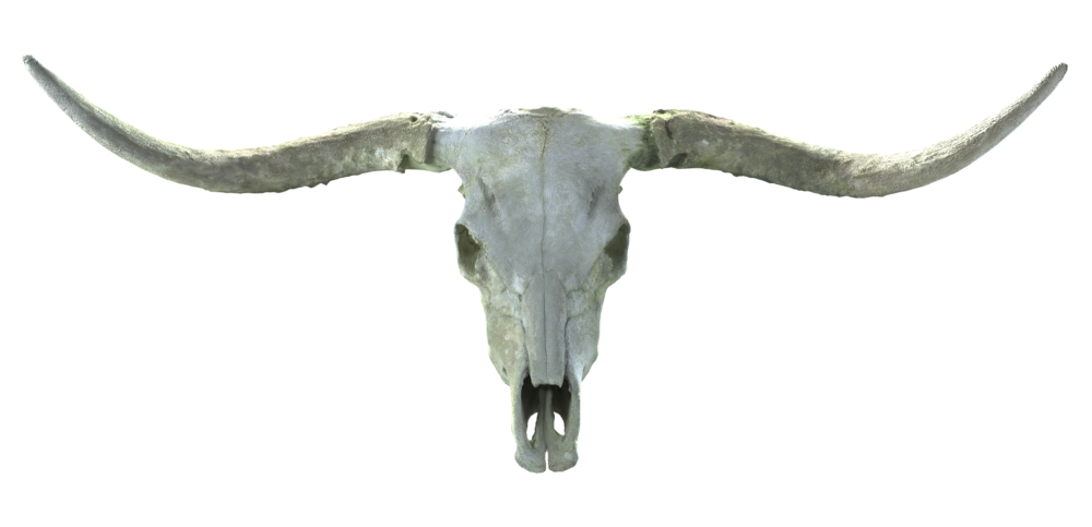 Long_Horn_Skull_Wide.png