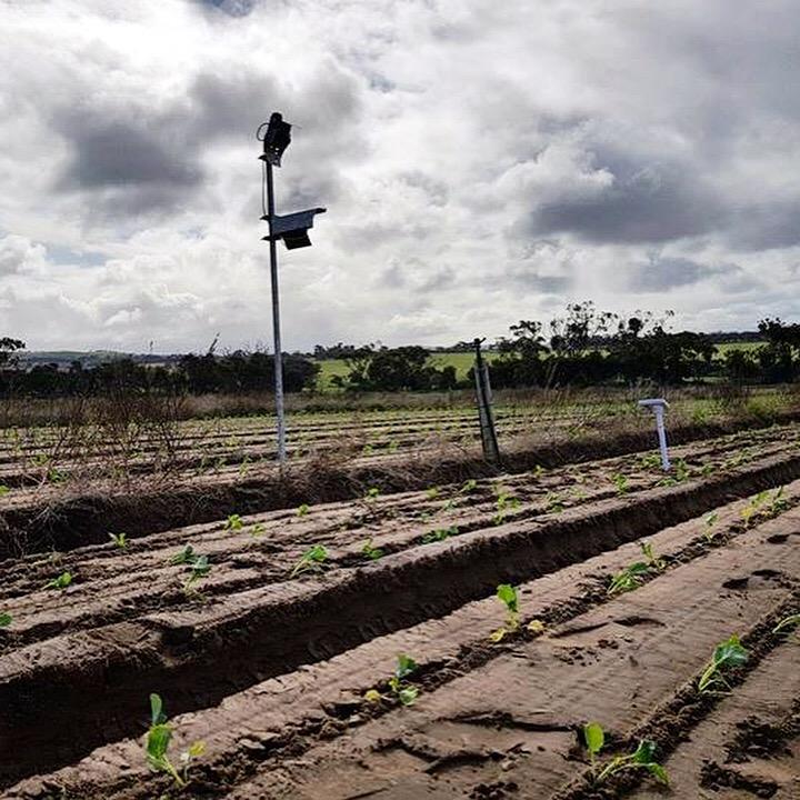 tie-up-farming
