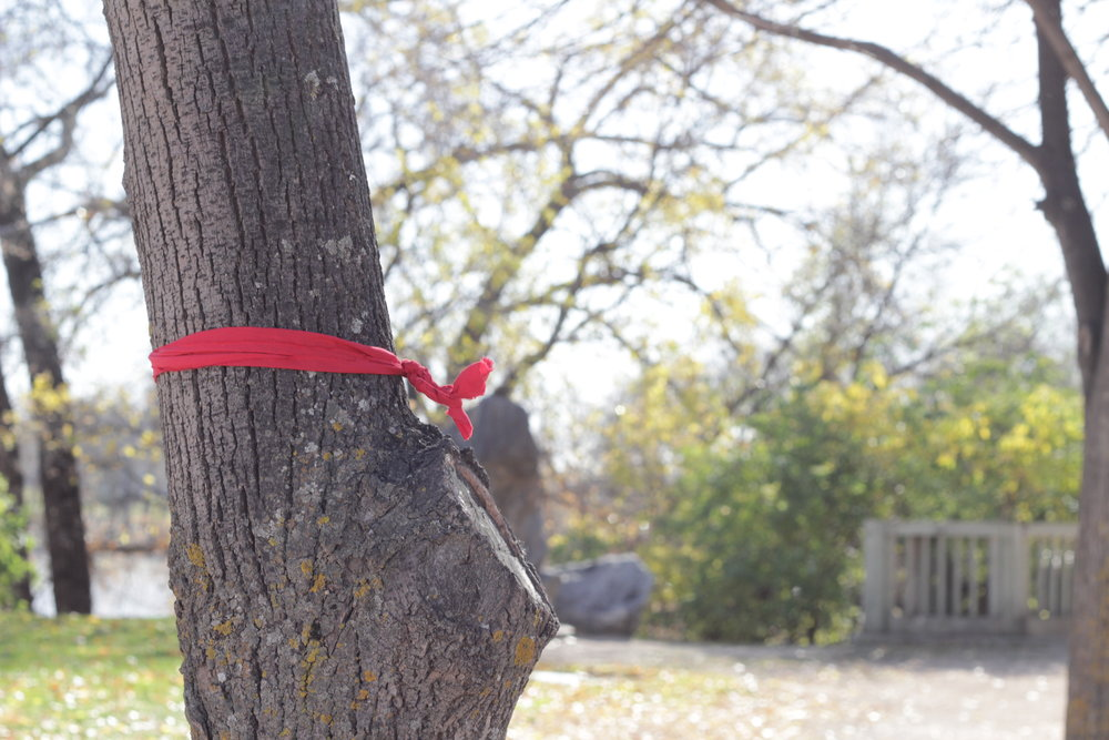 A red ribbon tied around a tree at The Forks to symbolize Winnipeg's missing and murdered women.